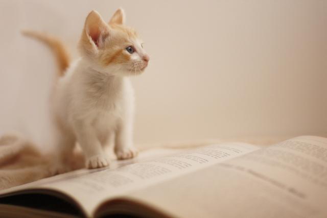 読書とブクマ