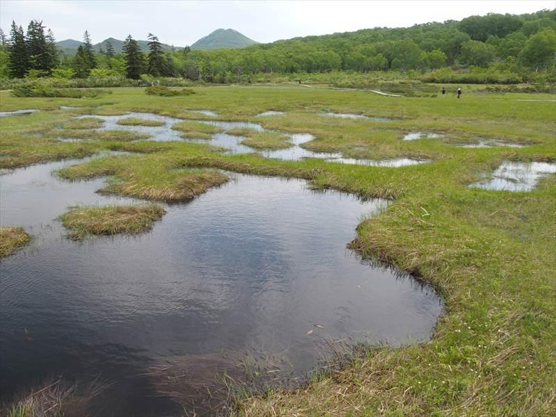 神仙沼の湿地