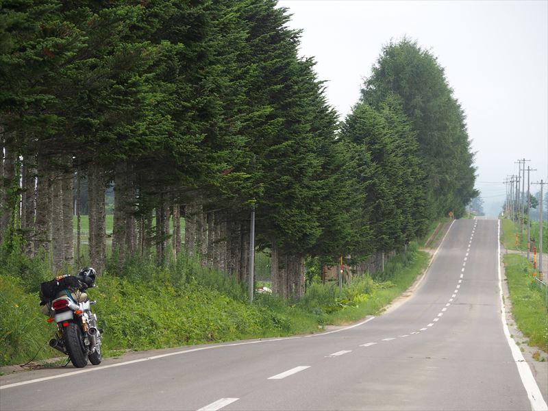 十勝平野の波打つ木々