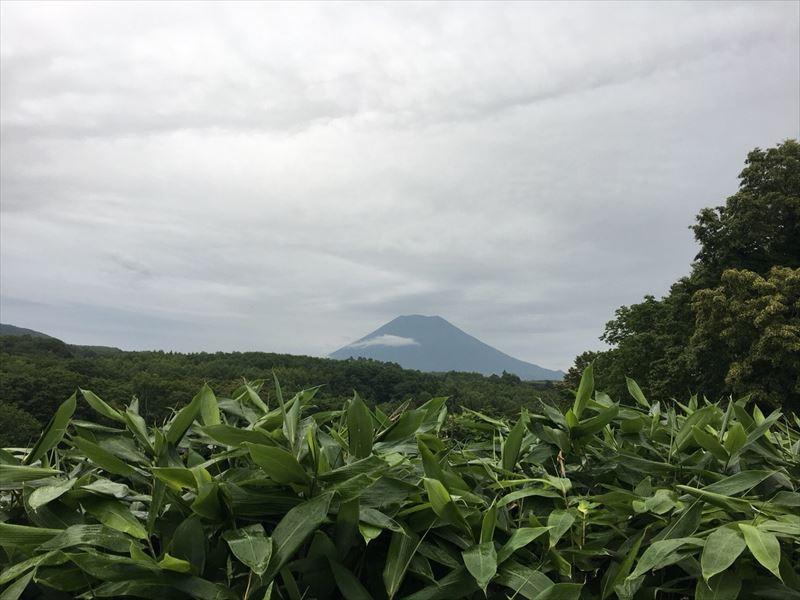 サイトから見た羊蹄山