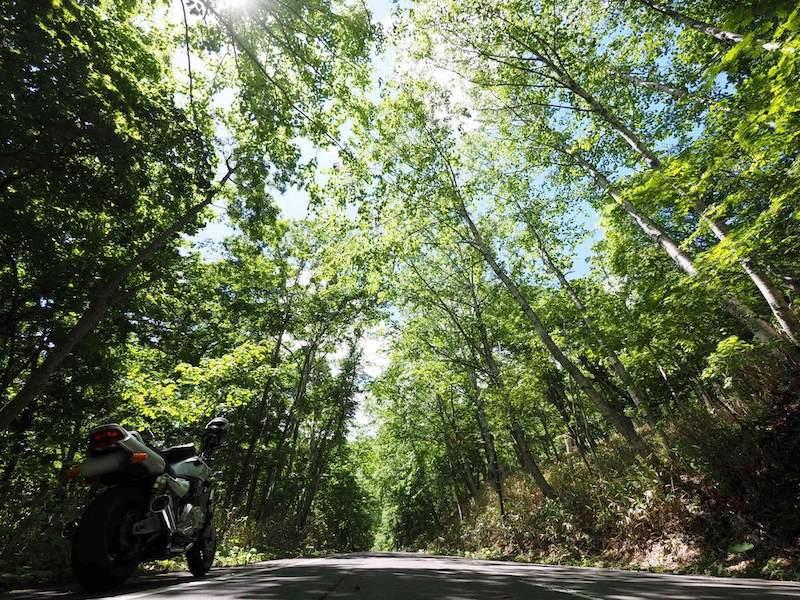 超広角レンズで撮影した木のトンネル