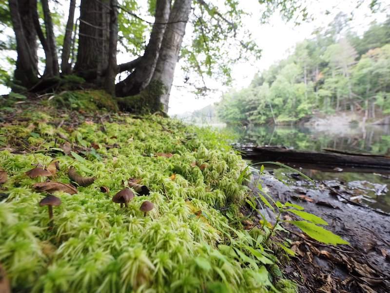 超広角レンズで撮影した苔
