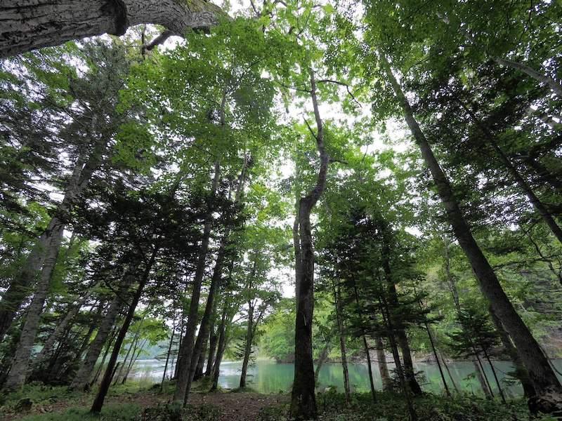 超広角レンズで撮った森