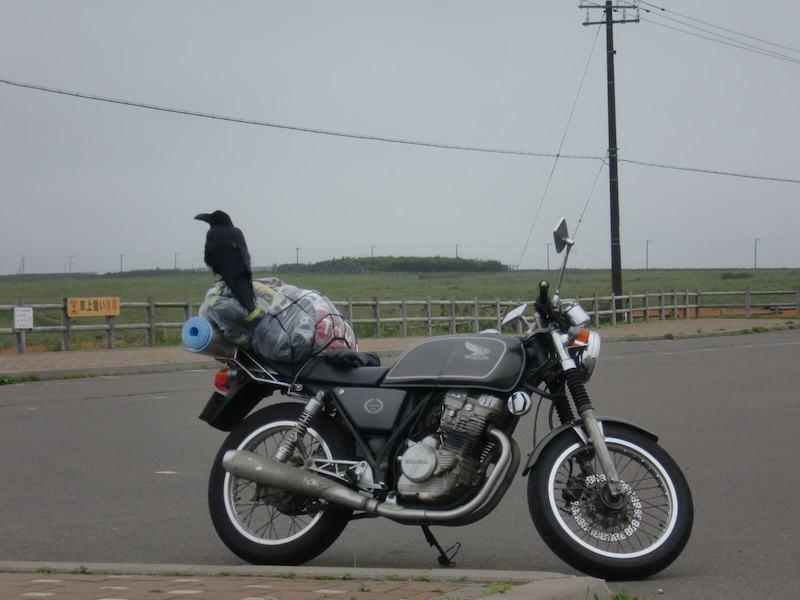 バイクの上のカラス