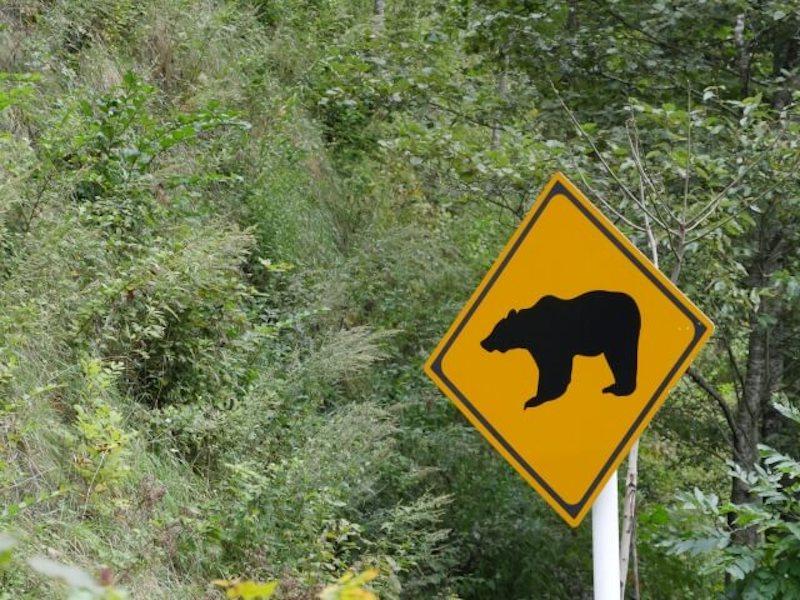 クマ注意の標識