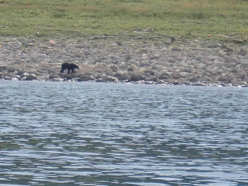 知床で見たヒグマ