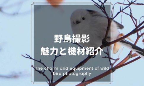 野鳥撮影の魅力と機材の紹介